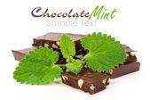 шоколад с свежих листьев мяты — Стоковое фото