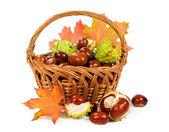 каштаны с осенние листья в корзине — Стоковое фото