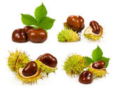 Collection of chestnuts — Stock Photo
