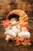 Funghi con foglie autunnali e close-up cestino di vimini — Foto Stock