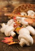 キノコの秋は、葉と枝編み細工品バスケット — ストック写真