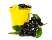 Berries of black elder in a yellow bucket — Stock Photo