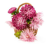 Bouquet of pink chrysanthemums — Stockfoto