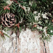 Stock Photo: Spruce branches with cones and snow