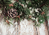 Spruce branches with cones and snow — Stok fotoğraf