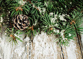 Spruce branches with cones and snow — Stock Photo