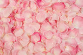 Background of rose petals — Stockfoto