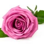 Single pink rose — Stock Photo #37843497