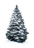 Ель, покрытые снегом — Стоковое фото