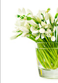 Bouquet of snowdrops in a glass — Stock Photo