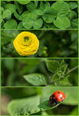 Collection of nature banners — Stock Photo