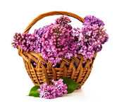 Wicker basket with lilac — Stock Photo