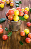 Plums in a small bucket  — Stock Photo