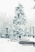 Snow-covered spruce in the park — Stock Photo