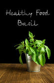 Basil in a bucket  — Stock Photo