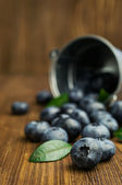 Blueberries in small bucket  — Stockfoto