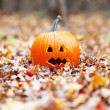 Pumpkin in autumn leaves — ストック写真