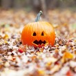 Pumpkin in autumn leaves — Stockfoto