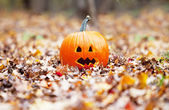 Pumpkin in autumn leaves — Photo