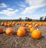 Pumpkins on display in the Fall — Stock Photo