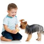 Boy kid feeding dog isolated on white background — Stock Photo #18473155