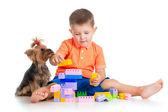 Dítě hraje s hračkami, stavební bloky. York terier pes dojed — Stock fotografie