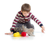 Child boy playing with kittens isolated on white background — Stock Photo