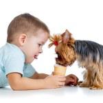 Boy kid feeding dog isolated on white background — Stock Photo #19210367
