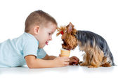 Boy kid feeding dog isolated on white background — Stock Photo