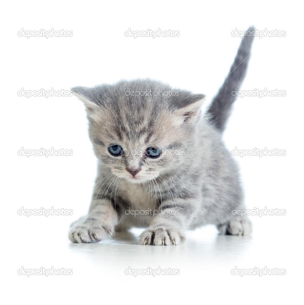 滑稽行走的小猫小猫