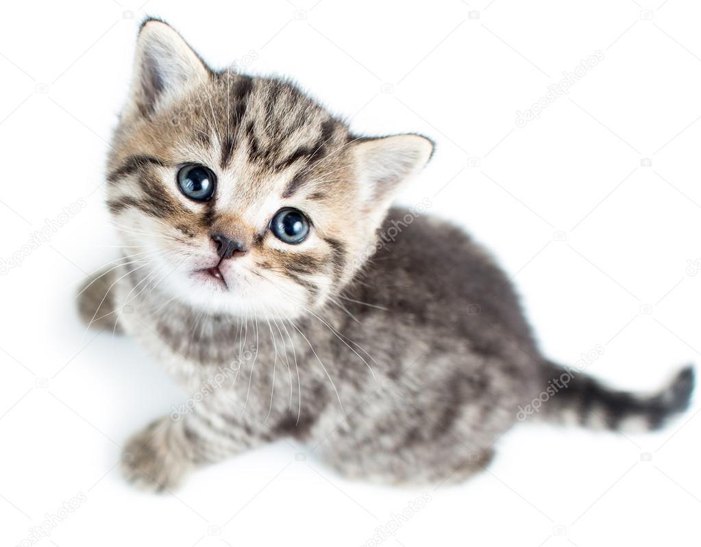 Free Computer Wallpaper Cats