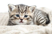 Baby cat kitten lying on jersey — Stock Photo