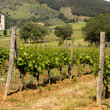 Vineyards and Tuscan abbey - Foto de Stock  