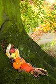 Halloween pumpkins on a tree — Stock Photo