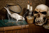 Rat and skull — Stock Photo