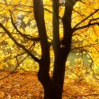 Sun beams on an autumn tree - Stock Photo