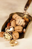 Copper shovel with autumn nuts — Stock Photo