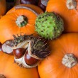 Pumpkins and chestnuts — Stock Photo