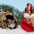 Stock Photo: Christmas hamster