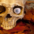 Stock Photo: Skull closeup