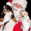 Santa with two puppies — Stock Photo
