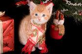 Рождество Китти — Стоковое фото
