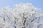 Hoard frost — Stock Photo