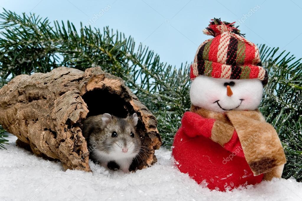 Little gray hamster in snow at christmas  Stock Photo #13483822