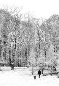 A pie de nieve con el perro — Foto de Stock