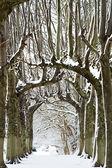Snow parade — Stock Photo