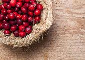 Thanksgiving nest of berries — 图库照片