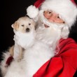 Santa with golden retriever dog — Stock Photo