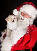 Santa mit golden retriever hund — Stockfoto