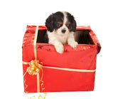 Puppy surprise for christmas — Stock Photo